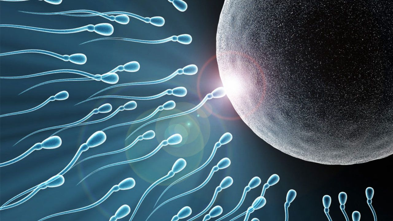 tinh trùng gặp trứng